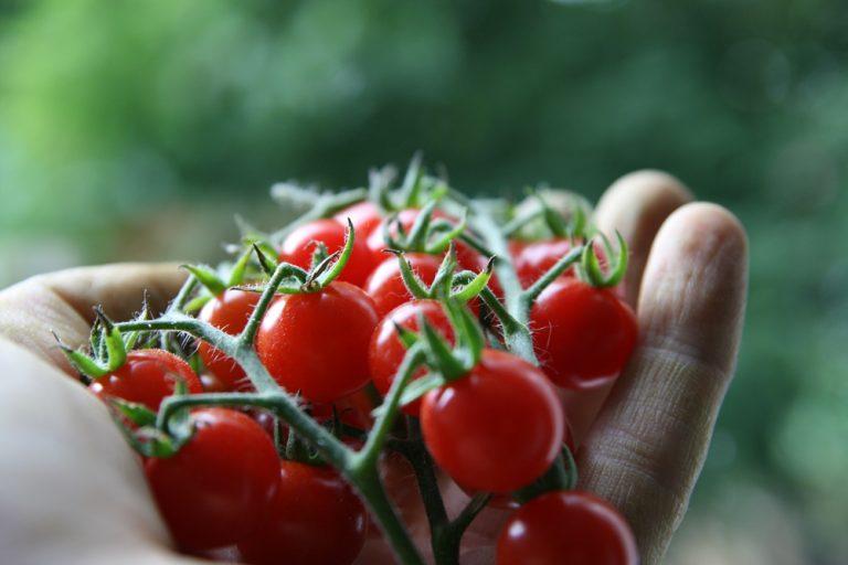 AgraGron Gübre fertilizer