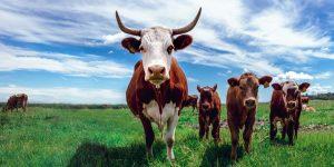 Çiftlik Gübresi Nedir?