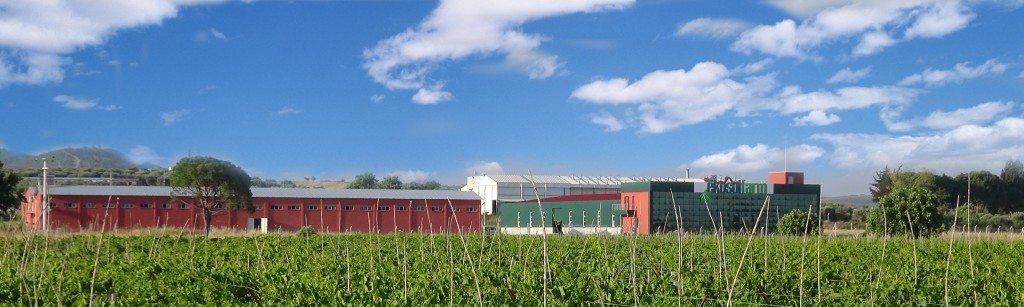 ekosol tarım manisa solucan gübresi üretim tesisi