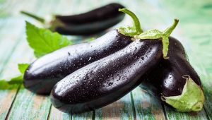 patlıcan yetiştiriciliği